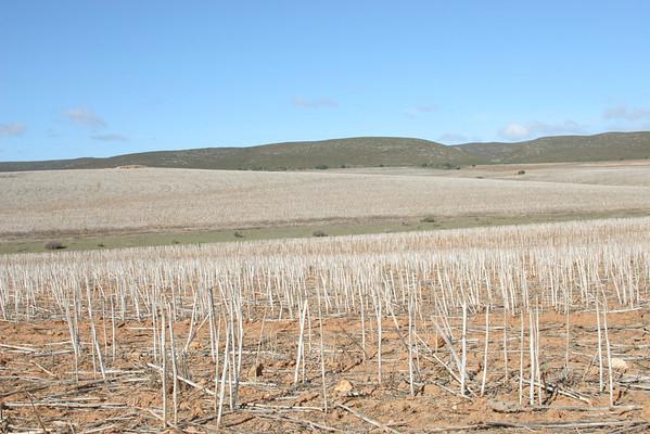 Crops: various