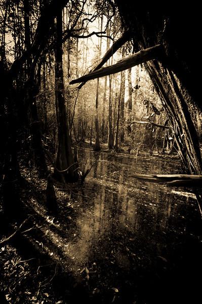 light in the swamp.jpg
