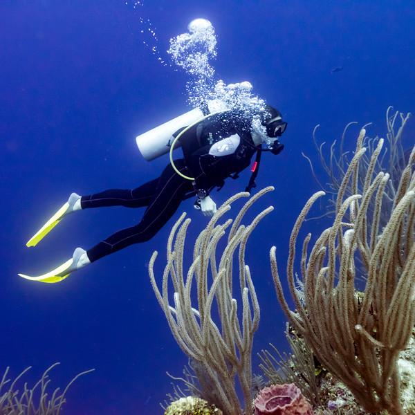 Scuba diver underwater near coral reefs, Belize Barrier Reef, Belize
