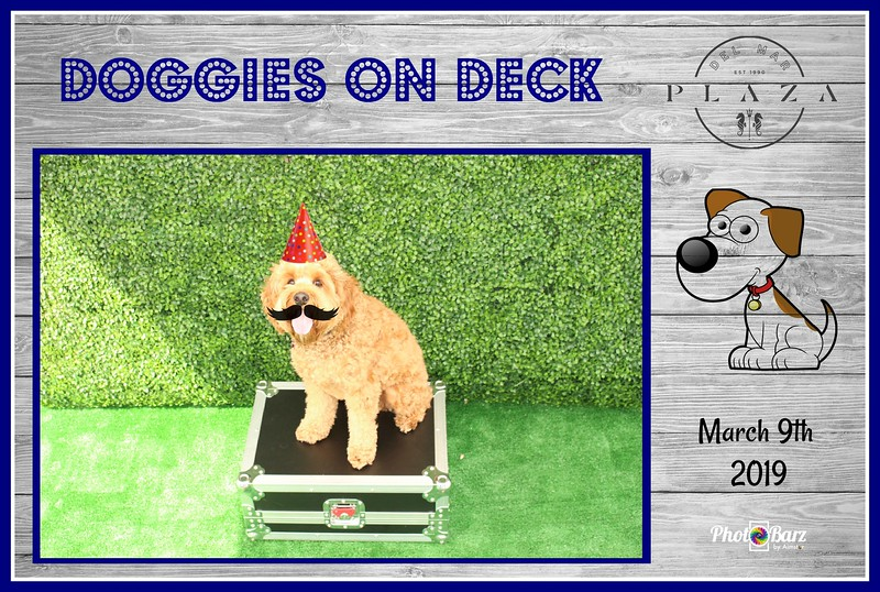 Doggys on Deck22.jpg