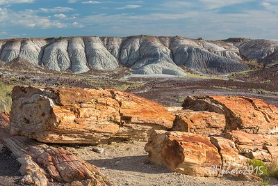 2015 Petrified forest
