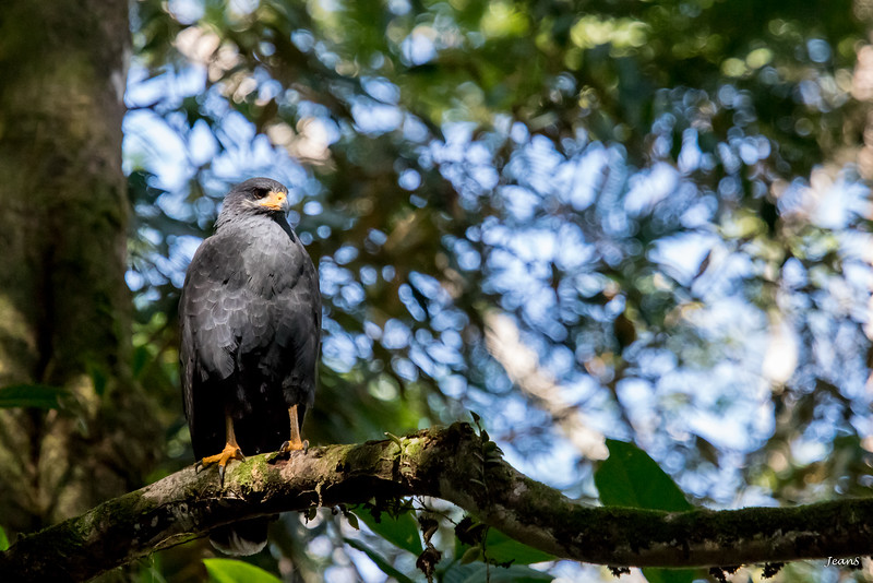 Oiseau _MG_3056.jpg