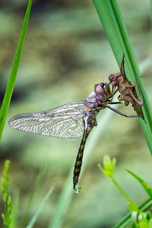 North American Invertebrates
