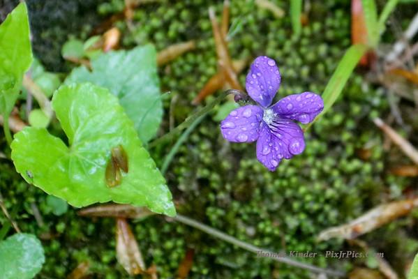 Wildflower Walk 4/23/16