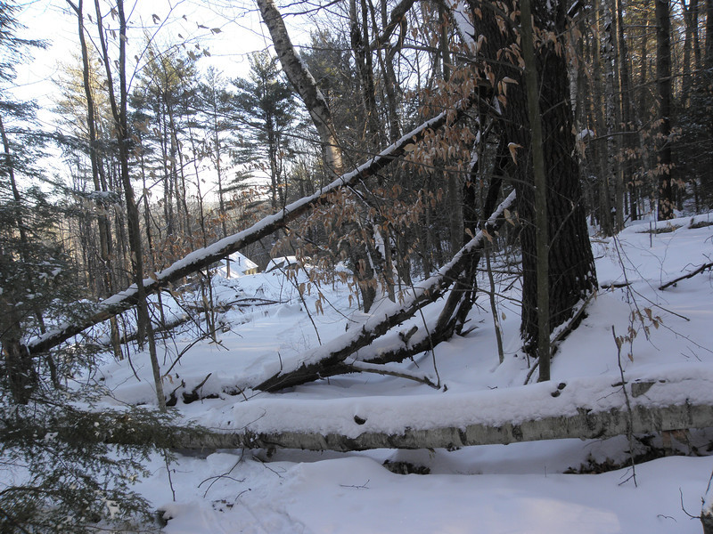 Some loser landowner leaves a blowdown mess.JPG