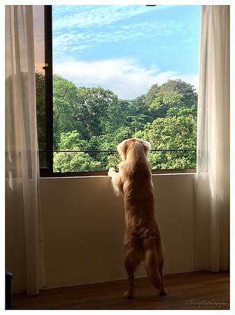 truffy at window.jpg