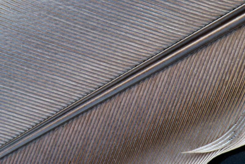 featherIII.jpg