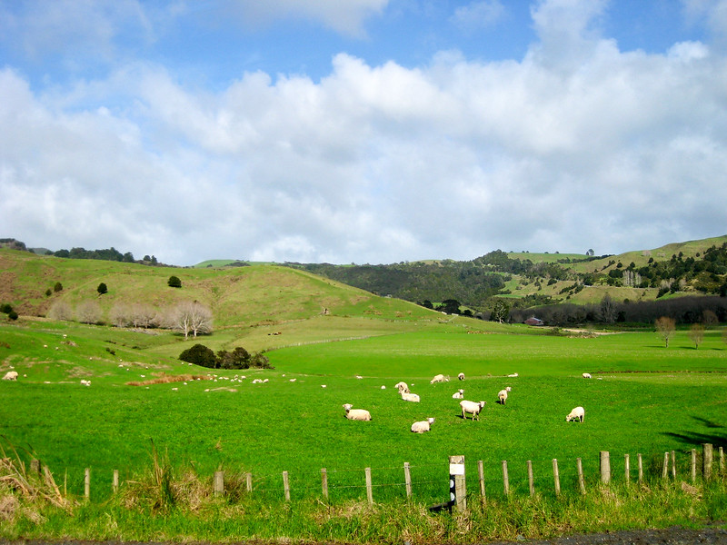 New Zealand farm land