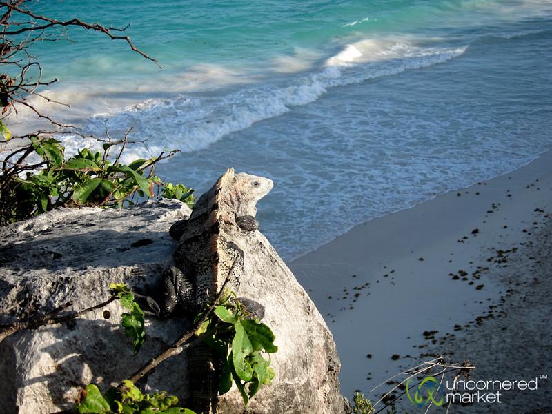Iguana With Ocean View - Tulum Ruins, Mexico