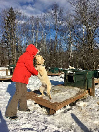 Muddy Paws Dog Sled