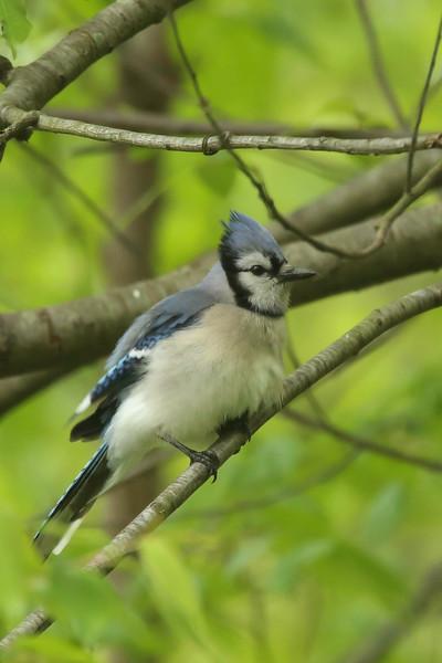 Birds 5-12-107.jpg