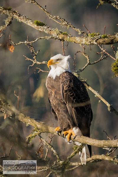 Eagle Sml-17.jpg