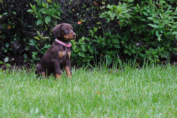 Jane Dog