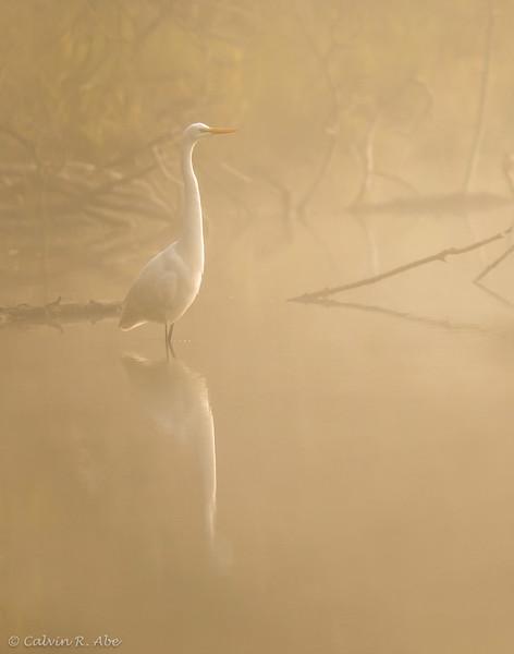 Curious Egret-FB.jpg