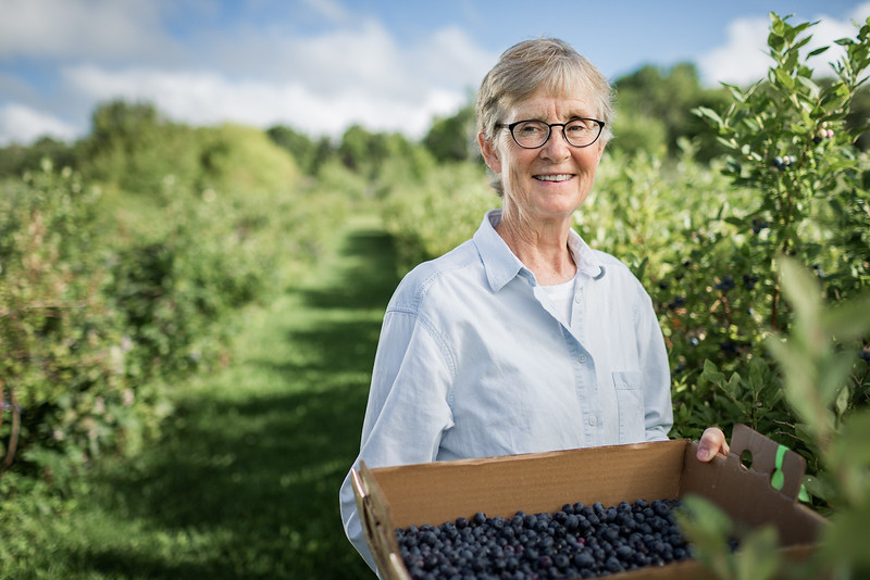 A woman picking blueberries.