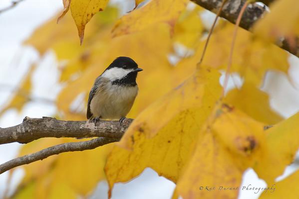 Fall 2012 Birds