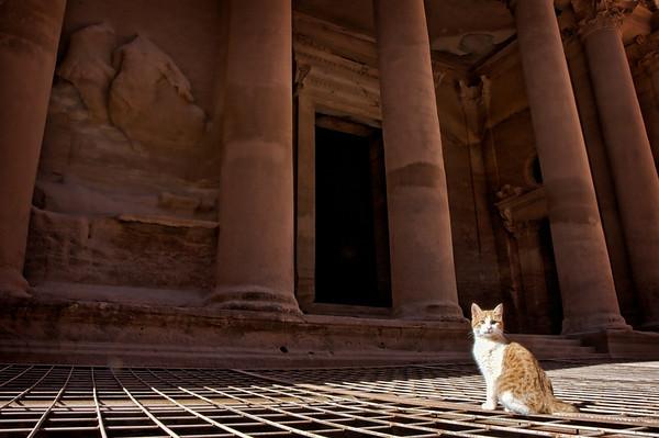 Purrfect Petra