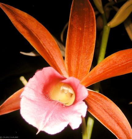 Las Orquídeas