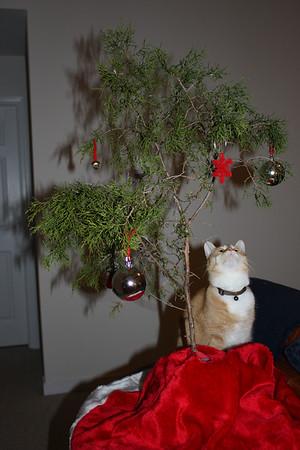 Quentin Destroys Christmas