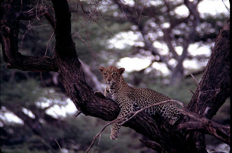 Kenya1_087.jpg