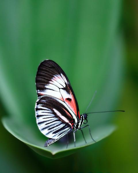 Piano Key Butterfly-7455.jpg
