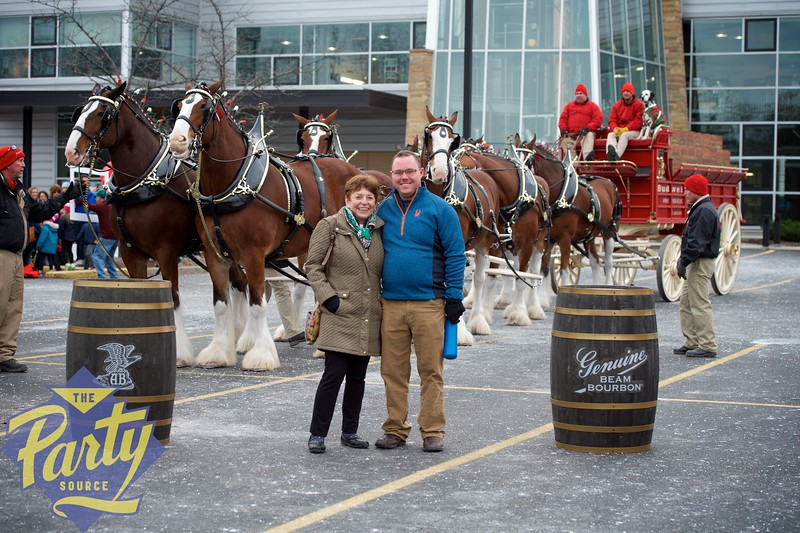 Clydesdale Portraits 28.jpg