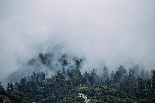 Foggy Forest Falls