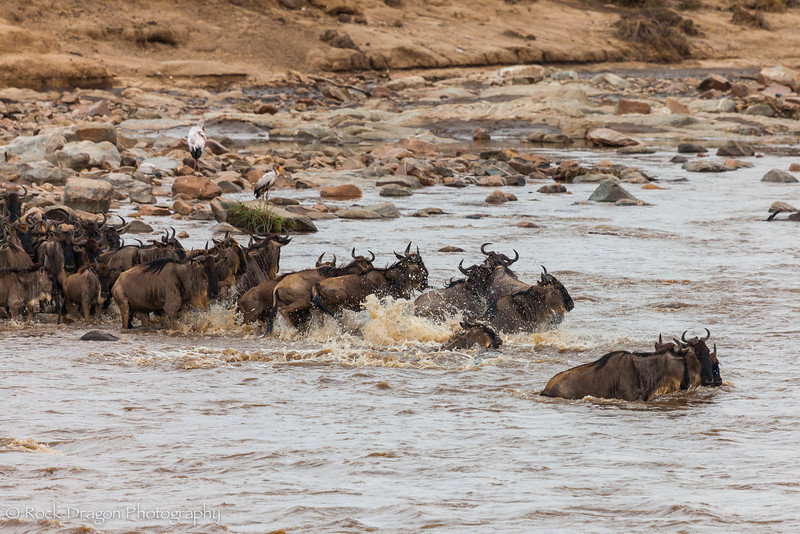 North_Serengeti-45.jpg