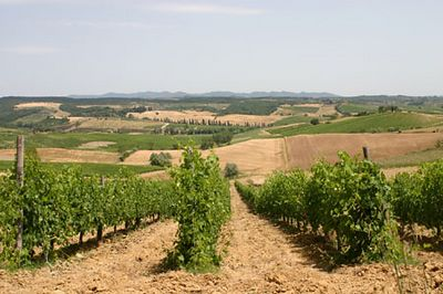 Viinapuud Toscanas