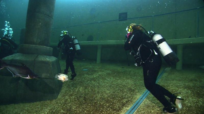 Underwater Walk Edit.00_00_50_18.Still022.jpg