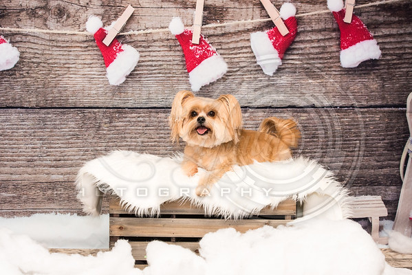 Pet Time Holiday Shoot - 2017