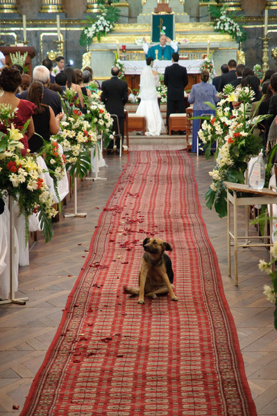 Tequila wedding