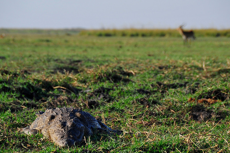 EPV0179 Crocodile Menaces Wildlife.jpg