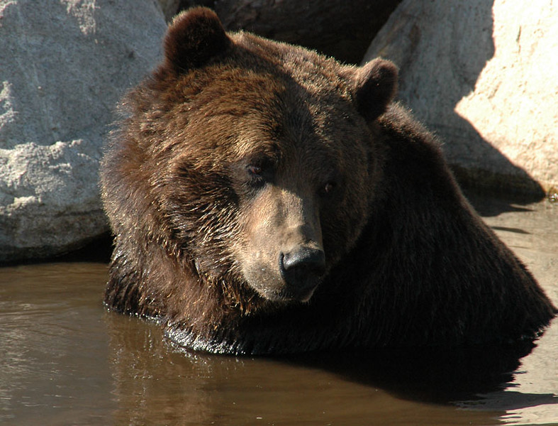 Bear6.jpg