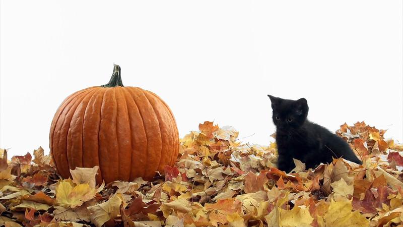 kitten_pumpkin_01.mov