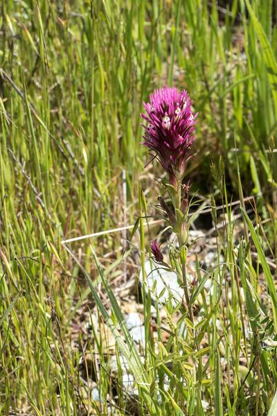 Edgewood_Park_wildflowers-22.jpg