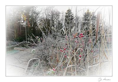 Winter in Zutendaal