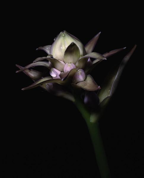 FlowerMacro00060-Edit.jpg