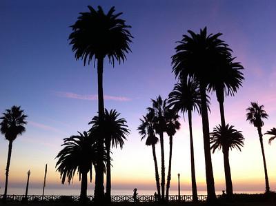 California 🐻