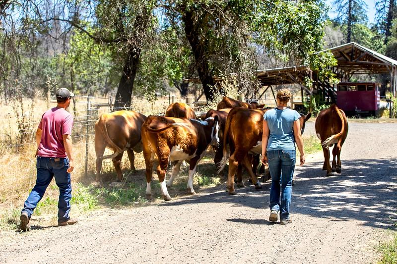 BeeWell0093-Herd.jpg