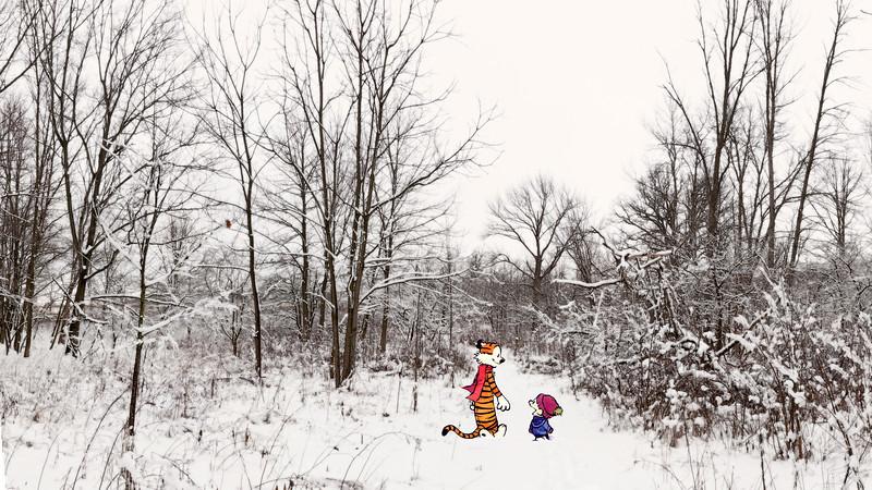 A nice walk in snowy Big Woods.