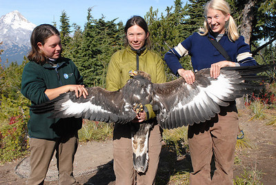 Bonney Butte Raptor Migration Project, Oct. 23, 2006