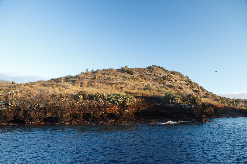 Champion Island, Galapagos, Ecuador (11-22-2011)-5.jpg