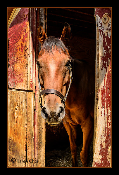 Horse coming out barn door sm.jpg