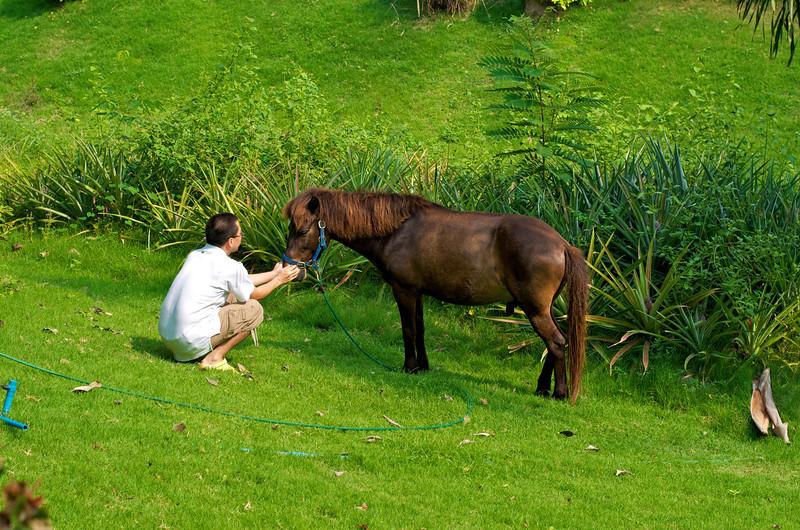 Very cute Pony.jpg