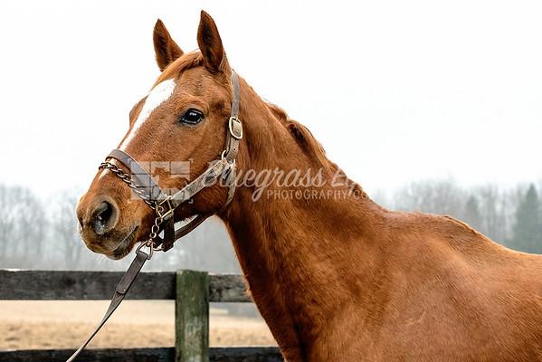 Horse#10