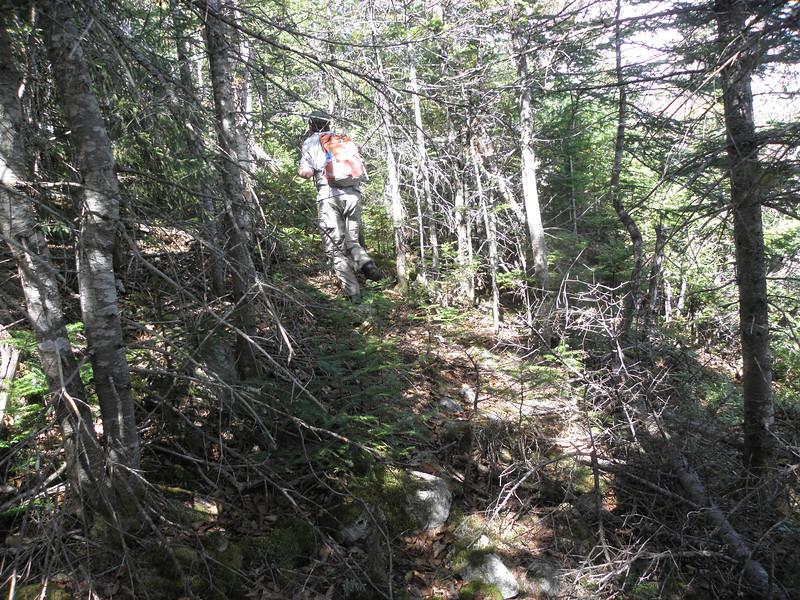 Finding a herd path near 3300'.JPG