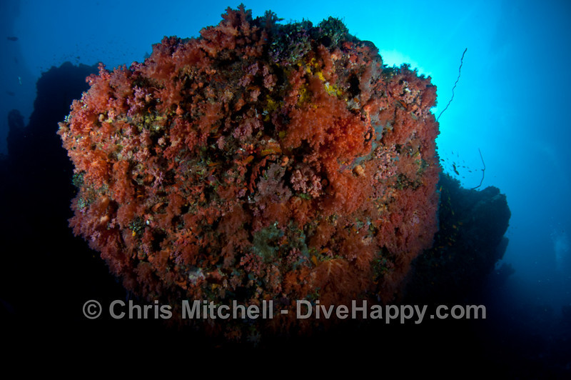 maldives-scuba-diving-april-2011-8.jpg