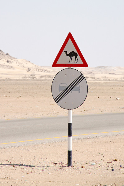 Local hazard: camel crossing sign in the desert.