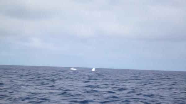 2013 Tonga